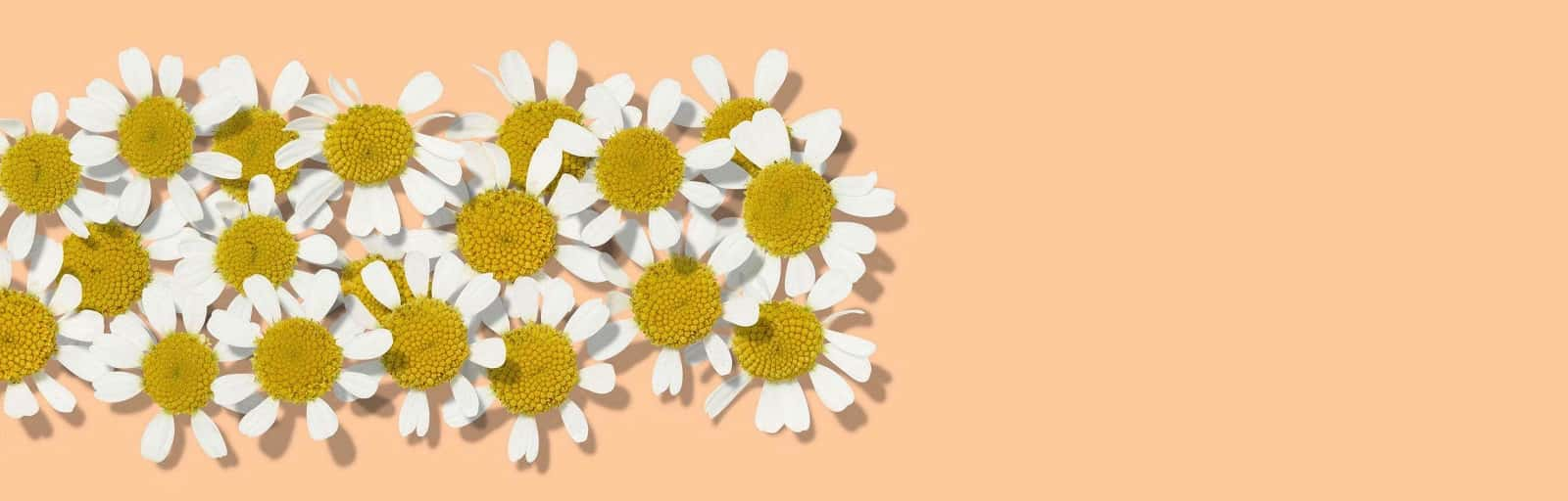 AVEENO® feverfew skin care ingredient