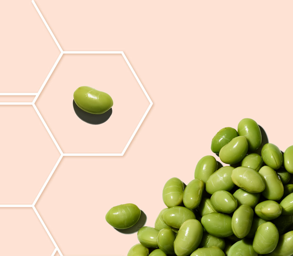 soy bean in a molecule grid against a peach background