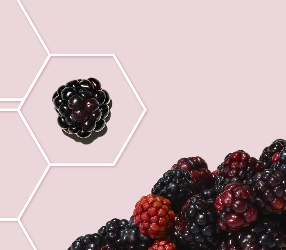 blackberry inside a molecule grid outline against a pink background