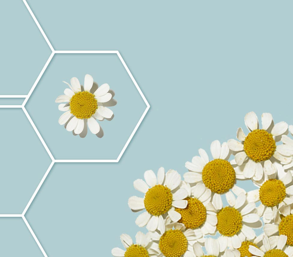 flower inside a molecule outline against a light blue background