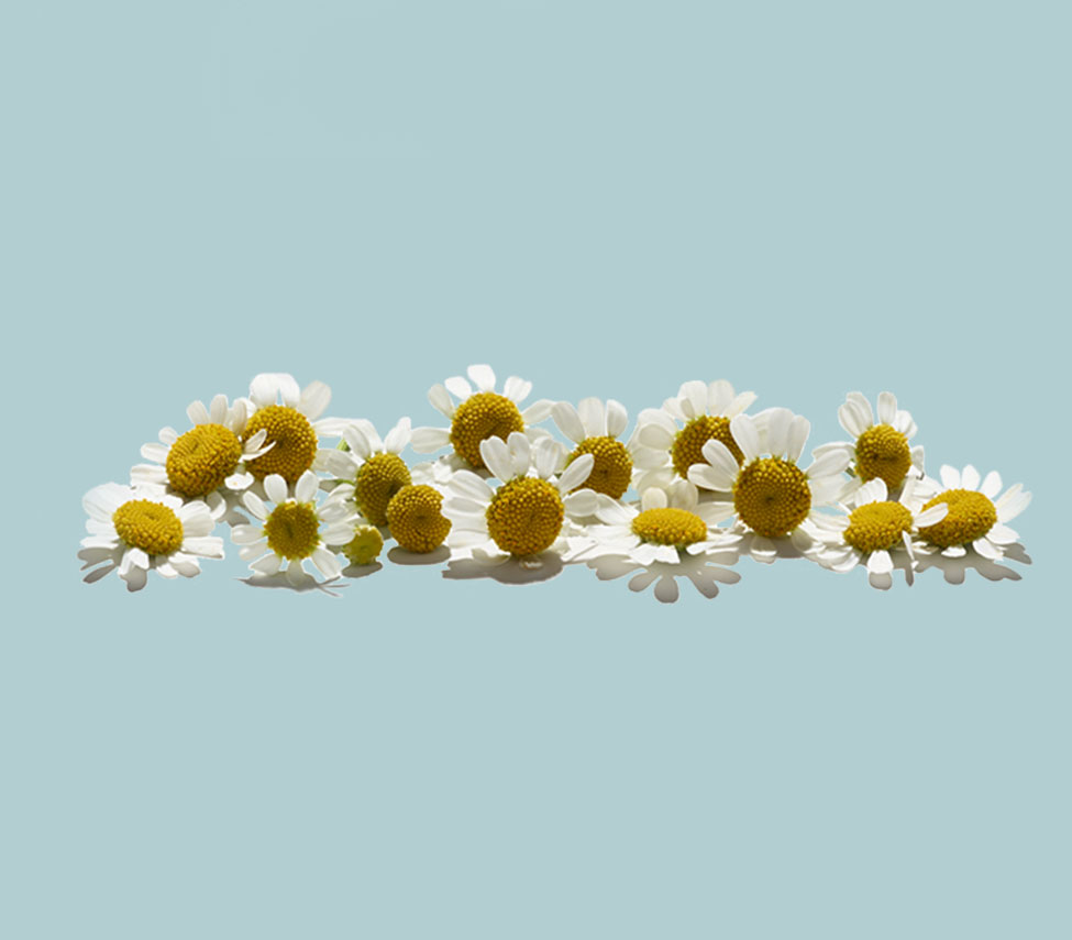 line of flowers against a light blue background