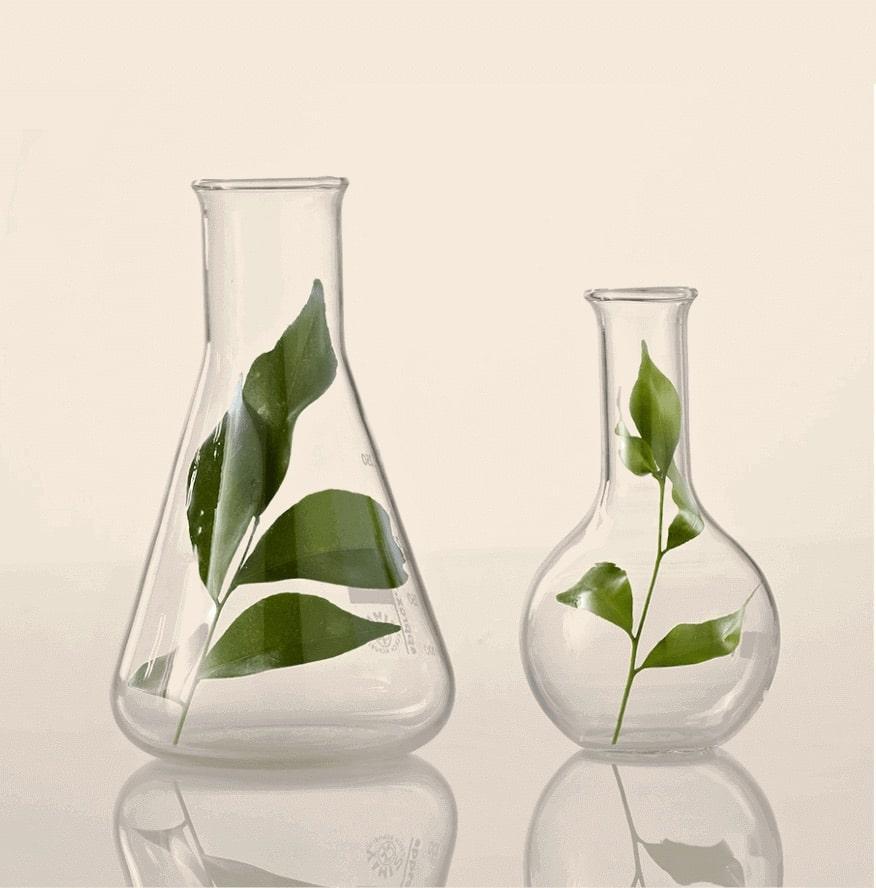 Plant leaves in scientific beakers